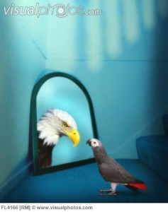 Parrot Looking at Reflection of Eagle in Mirror